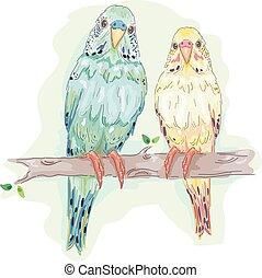 pássaros, budgies, par