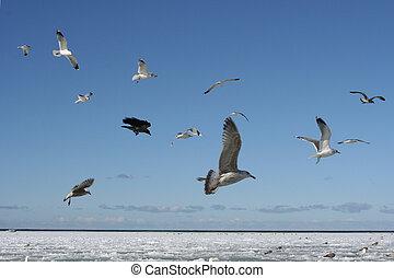 pássaros, em, a, céu