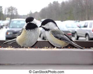 pássaros, em, a, estacionamento