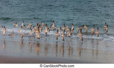 pássaros, em, a, mar