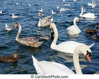 pássaros, em, lago