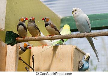 pássaros, em, um, gaiola