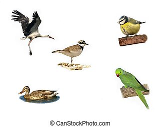 pássaros, isolado, branco