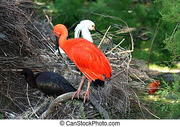 pássaros, jardim zoológico, animais
