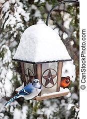 pássaros, ligado, alimentador pássaro, em, inverno