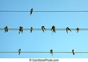 pássaros, ligado, fio
