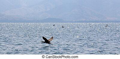 pássaros, ligado, lago, prespa, macedonia