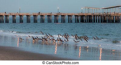Pássaros, mar