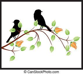 pássaros, rosas