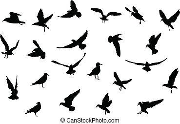 pássaros, silhuetas