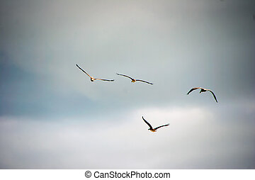 pássaros, vôo