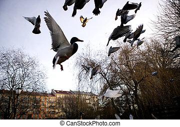 pássaros, vôo, sihlouette