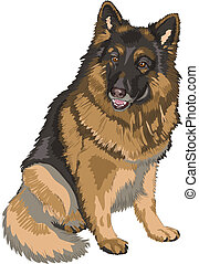 pásztor, skicc, szín, fajta, kutya, német, vektor