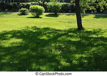 pázsit, rövid, eredet, fa, zöld, árnyék, fű