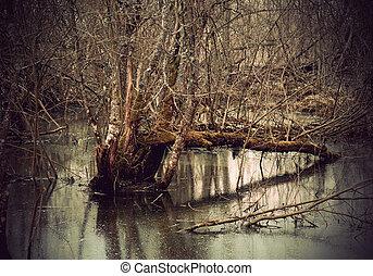 pântano, árvores