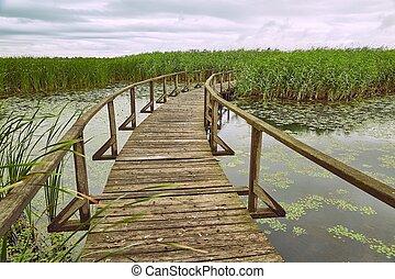 pântano, andar, caminho