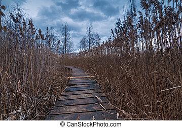 pântano, andar, path.