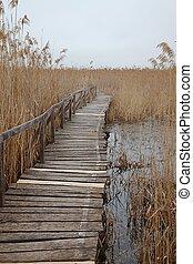 pântano, caminho