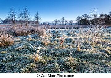 pântano, em, manhã, inverno, geada