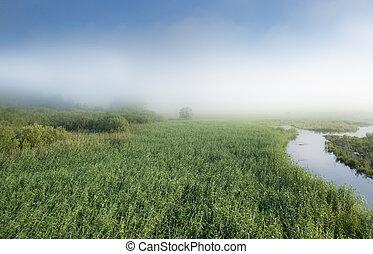 pântano, em, nevoeiro