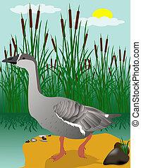 pântano, ganso, ilustração, vetorial