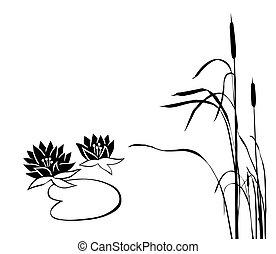 pântano, silueta, plantas