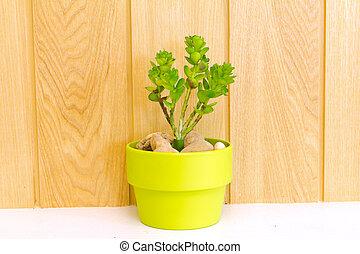 pâquerette, arbre, flowerpot., collection, vert