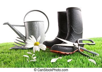 pâquerette, boîte, arrosage, herbe, bottes