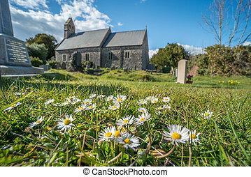 pâquerettes, cimetière, église