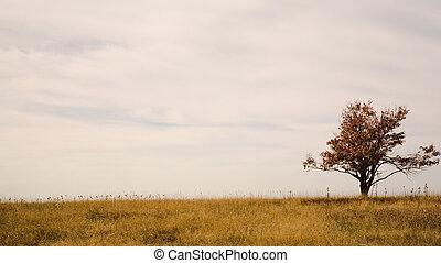 pâturage, arbre, solitaire
