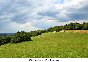 pâturage, colline verte, champ