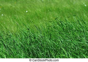 pâturage, herbe, vert, grand