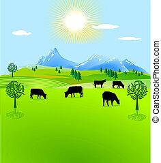 pâturage, montagne, vache, enclos