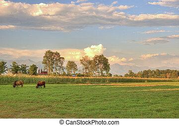 pâturage, vache, coucher soleil