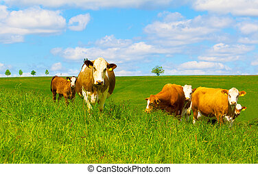 pâturage, vert, vache