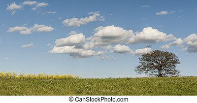 pâturages, arbre, solitaire