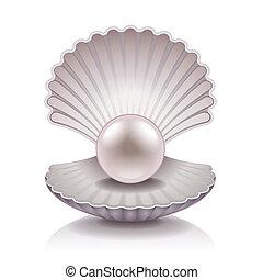 pärla, skal, vektor, illustration
