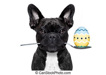 ägg hund