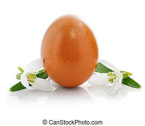 påsk egga, med, blomningen, av, snödroppar