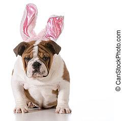 påsk, hund
