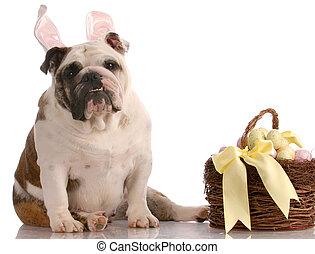 påsk, hund, med, korg
