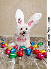 påsk kanin, hund, med, choklad påsk eggar