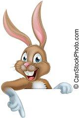 påsk kanin, kanin, pekande, nedåt