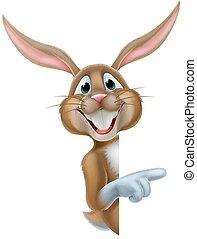 påsk kanin, kanin, pekande