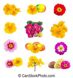 påsk, kollektion, vår blommar