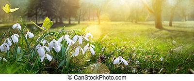 påsk, vår blomma, background;, frisk, blomma, och, gul fjäril, på, grönt gräs, bakgrund