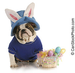 påske, hund