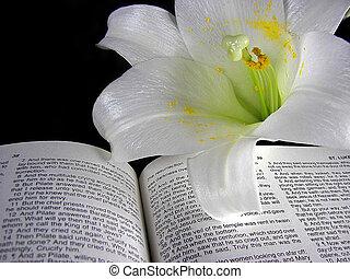 påsklilja, på, välsignad bibel