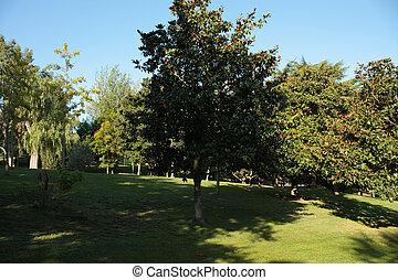 père, cinto, barcelona., montjuic, jardins, verdaguer