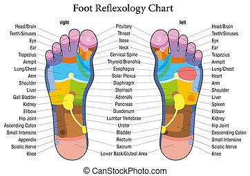 pé, reflexology, mapa, descrição